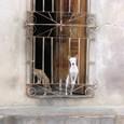 Gato_y_perro